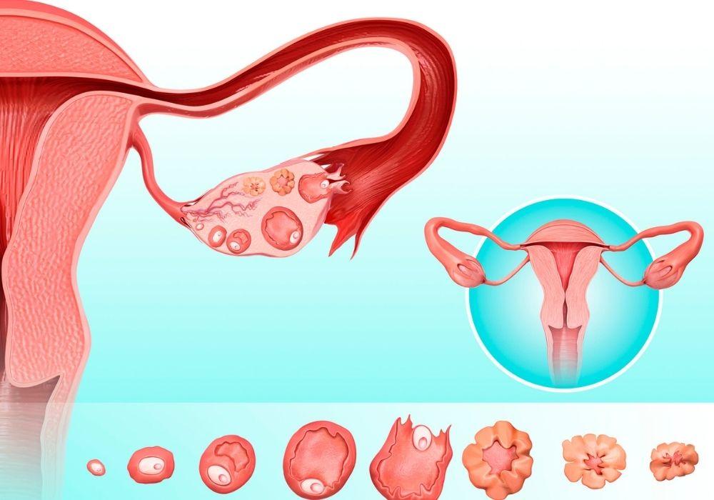 Beräkna datum för förlossning ägglossning
