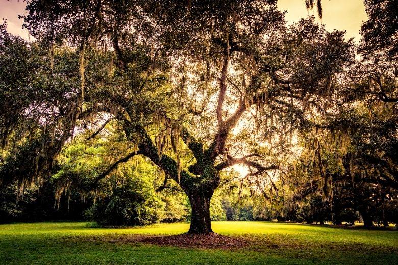 Ge bort träd i doppresent